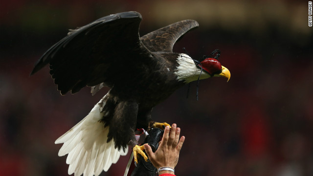 Portuguese club Benfica are nicknamed the Eagles and before each home game an eagle flies around the Estadio da Luz.