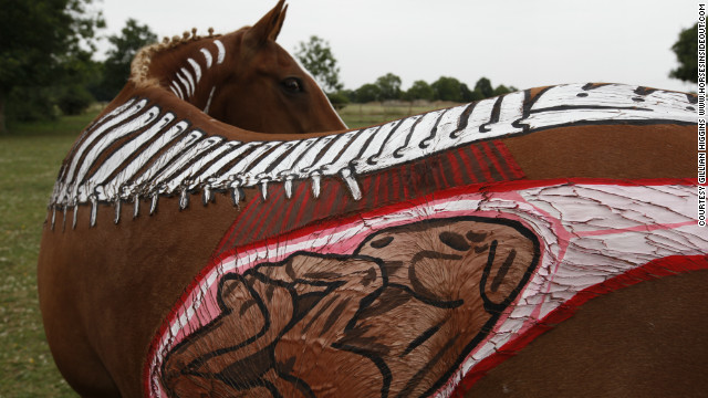 This remarkable picture shows the horse's reproductive system, including an unborn foal.