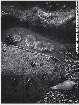 Sea Anemones, Shore Detail, Bodega Head, California, 1969.
