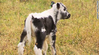 randall lineback newborn