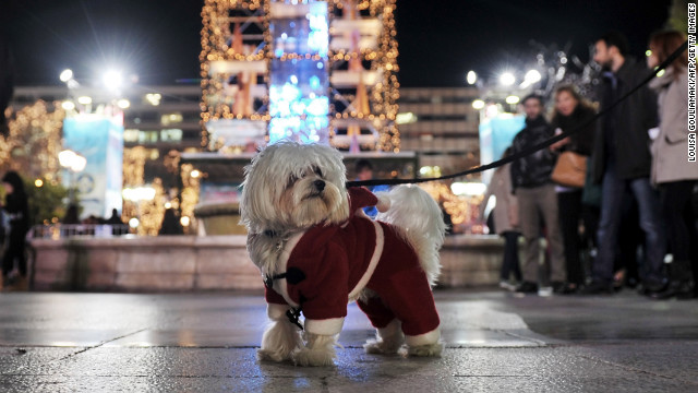 A dog dressed up for the season is out and about at the annual Christmas illumination of Syntagma Square in Athens, Greece, on December 11.<!-- --> </br>
