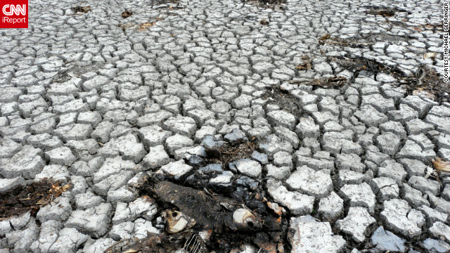 "A historic drought in Terre Haute, Indiana, dried up a lake at the Wabashiki Fish and Wildlife Area, killing the fish living in it back in July. At the time, photographer Michael Gerringer said, ""This lake attracts an impressive variety of birds and other wildlife, but when I walked out into the lake bed the only bird species I saw were a pair of turkey vultures overhead and a few red-headed Woodpeckers."""