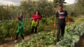 Farm living a lifeline in Greece