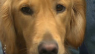 Dogs help Newtown heal after school shooting