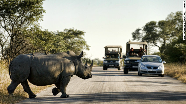 Latest Sightings has taken a stance against poaching and does not report any rhino sightings.
