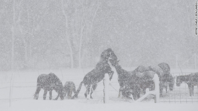 A group of horses play in the snow in Kingston, Wisconsin, on December 20. The State Patrol was warning motorists to stay home as a paralyzing winter storm approached, the first significant snowstorm to hit southern Wisconsin in two winters.