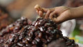 Dubai feeds demand for dates