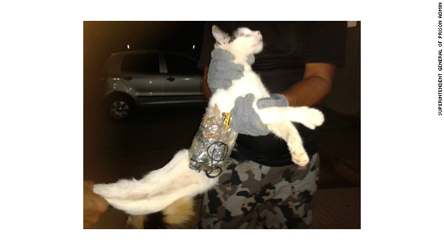 ¡Fuga! Un gato es atrapado en una prisión de Brasil con sierras, baterías y un celular