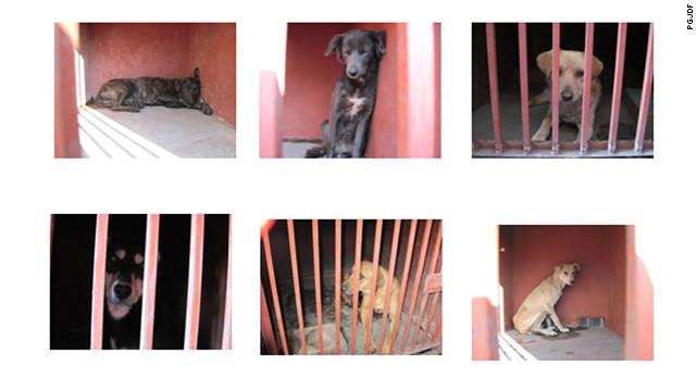 Autoridades mexicanas descartan sacrificio de perros capturados tras ataques
