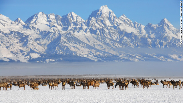 The Four Seasons Resort in Jackson Hole, Wyoming, offers an enhanced wildlife experience with small-group winter safaris in Yellowstone National Park.