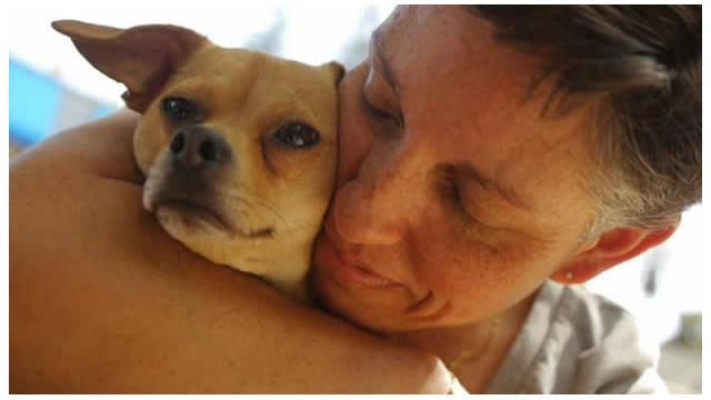 ¿Qué hacer si ya no puedes mantener a tu perro?