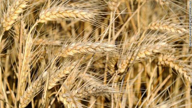 "Experts say many health problems stem from changes in food production. ""The hybridization of the native European wheat with a shorter, hardier strain from South America in the 1940s produced the particular gluten protein that triggers the sensitivity in people's digestive system,"" says Cetojevic. ""For thousands of years people ate and digested wheat without adverse effects, but we haven't yet adapted to the new protein in the hybrid variety that is now widely grown and marketed for its convenience and higher yield. People are better off eating the older strains such as spelt and kamut.""<!-- --> </br>"