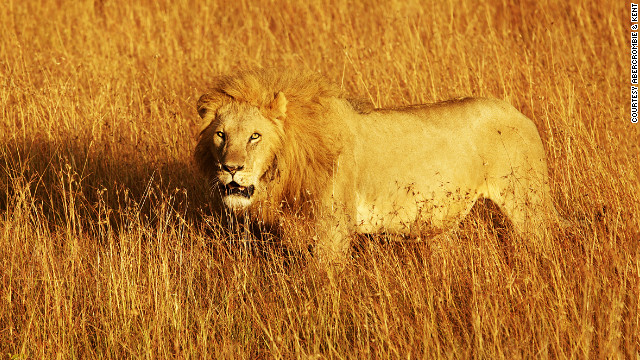 """In Kenya, the Maasai Mara and Lewa Conservancy still offer that same sense of space (as in earlier days), but the growing population means that farms are encroaching on the land surrounding game reserves,"" says Abercrombie & Kent co-founder Geoffrey Kent."