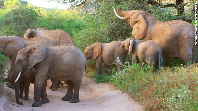 Kent has had numerous encounters with elephants, including a memorable charge by a matriarch in Tanzania. &quot;She picked up our Land Rover with her tusks and pushed us nine or 10 meters along the ground!&quot; he recalls.