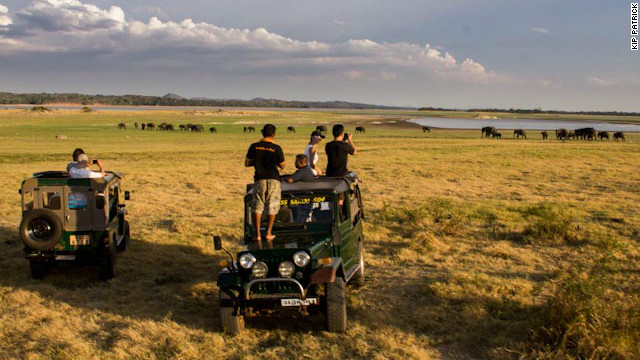 The Gathering attracts some of the largest herds of elephants seen anywhere. Tourists in jeeps watch a group of more than 30 animals making their way toward Minneriya's reservoir.