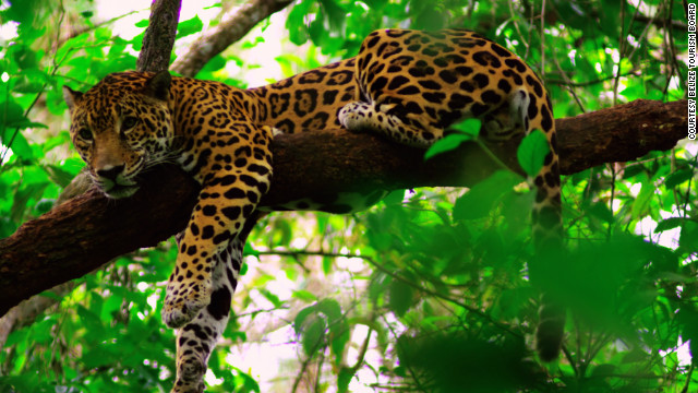 The Belize Zoo is about an hour from Belize City, and exhibits over 150 native animals. Many of these are nocturnal, so consider one of the night tours.