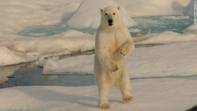 A polar bear approaches the boat of oceanographer Eric Brossier in the Canadian Arctic.