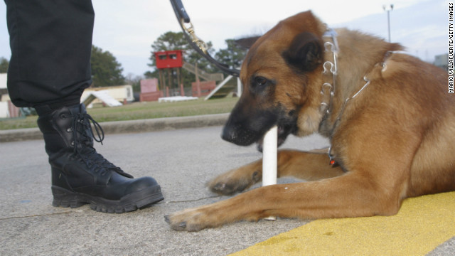 Secret Service dog falls to its death from roof of New Orleans parking deck