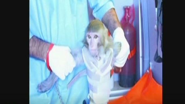 Irán anuncia el segundo lanzamiento de un mono en una misión espacial