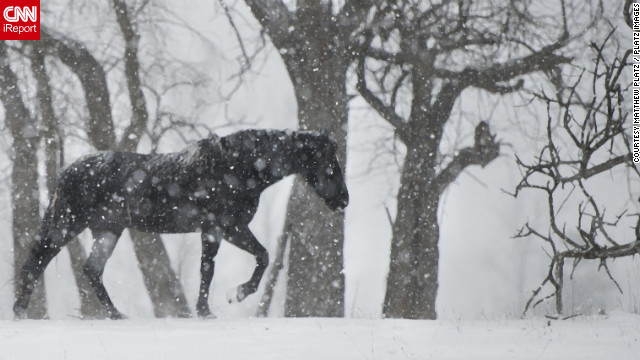 "When heavy snowfall hit Seville, Ohio, on the day after Christmas, Matthew Platz <a href='http://ireport.cnn.com/docs/DOC-902813'>headed to local farms</a> to capture animals in the snow. ""I had been waiting for our first good snow of the year to get out and capture all the natural beauty in our area,"" he said."