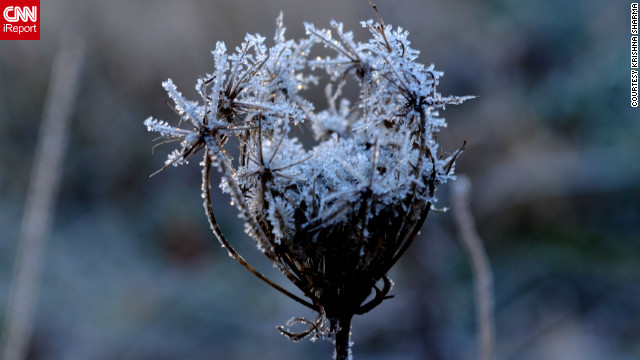 "One freezing morning changes everything. Krishna Sharma shared this photo and others from the grassy patch next to her office parking lot. Normally, he says, the plants look ""very ordinary,"" but a frost ""illuminates some of the intricate details"" of even the smallest leaf."
