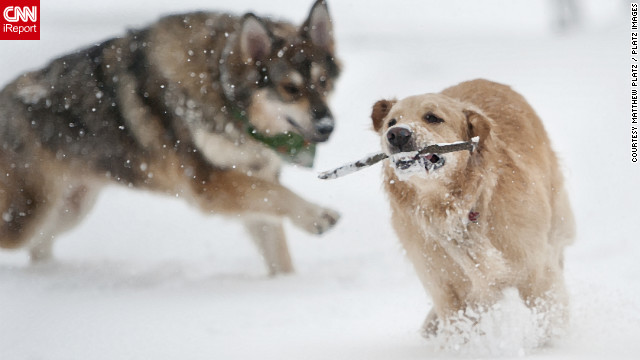 These two dogs seem to be <a href='http://ireport.cnn.com/docs/DOC-902813'>enjoying the snowfall</a> in another image from Matthew Platz in Ohio.