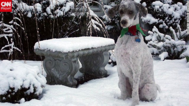 Standard poodle Huckleberry <a href='http://ireport.cnn.com/docs/DOC-901826'>takes in the snow</a> in Martinsburg, West Virginia. Charles Connolly, who shot this photo on Christmas Eve, says Huckleberry loves snow even though it's uncommon for the area.