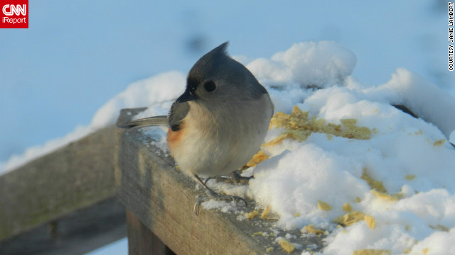 """Do you think bird feet get cold?"" wondered Janie Lambert as she <a href='http://ireport.cnn.com/docs/DOC-915765'>snapped this photo</a> from her Hughesville, Maryland, back yard. It was about 23 degrees when she captured the image on January 24."