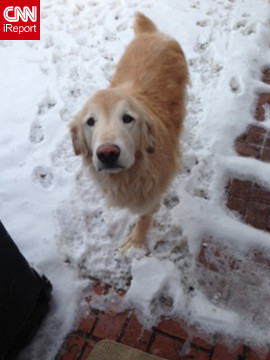 "Golden retriever Ray <a href='http://ireport.cnn.com/docs/DOC-902562'>enjoys a Christmas snow</a> in Plano, Texas. ""He had to have one of his front legs amputated this past fall due to cancer, so he can't romp around in the snow like he used to, but he does seem to enjoy it!"" said Tamara Galbraith."