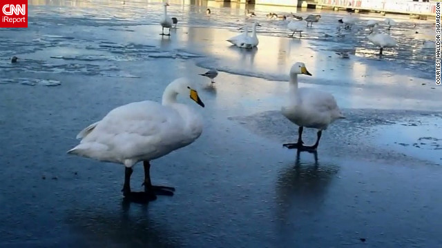 "Geese walk carefully along a <a href='http://ireport.cnn.com/docs/DOC-883269'>frozen pond</a> in Reykjavik, Iceland, on November 18. ""This is very common in wintertime,"" said Halldor Sigurdsson. ""It is always great to go there and walk on the pond and, of course, feed the birds."""
