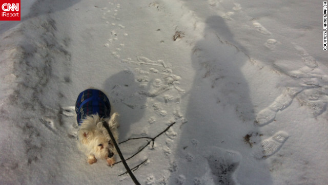 "iReporter Jannet Walsh snapped this photo her shadow along with her 14-year-old dog Andrew. ""It's been hard to walk the dog in the brutally cold arctic weather, as I am too cold to walk him,"" she said."