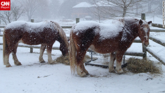 "Draft horses Isabella and Timothy get <a href='http://ireport.cnn.com/docs/DOC-915603'>blanketed by snow</a> in their Sandyston, New Jersey, pasture. ""Horses need more hay in extreme weather to stay warm,"" explained Victoria Jadali, who shot this photo January 22."