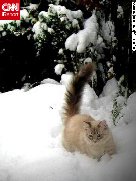 Andrew Newiss says his two cats enjoyed the snow that fell on Cowling, England, on January 26. They &quot;were trying to catch snowflakes through the window,&quot; he said. Teddy, pictured here, and Lucy were &quot;a little wary at first, but once they saw that I was outside they &lt;a href='http://ireport.cnn.com/docs/DOC-919628'&gt;pranced through the snow drifts&lt;/a&gt; and enjoyed the freedom and fresh air.&quot;