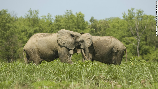 Mole National Park in the northeast is Ghana's largest wildlife refuge, home to over 93 species of mammal.