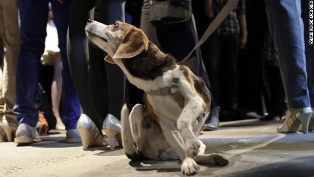 Rescue dogs presented at the Vaute Couture show on February 5 were available for adoption.