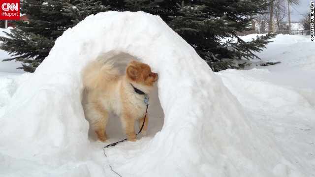 Bentley, a Pomeranian puppy, explores his Hibbing, Minnesota, igloo on February 7. Funda Ray, who built the igloo for him, says Bentley loved exploring it -- <a href='http://ireport.cnn.com/docs/DOC-921950'>and eating it</a>!