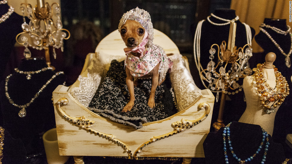 A dog shows off its jewelry at the New York Pet Fashion Show in New York City during Fashion Week 2013 Fall/Winter Collections on Friday, February 8.