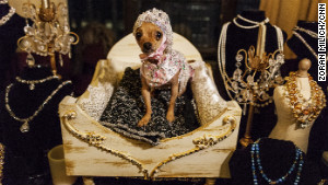 Photos: Dogs on the catwalk
