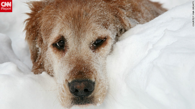 After a massive blizzard hit the northeast,<a href='http://ireport.cnn.com/docs/DOC-924263'> photographer Mia Orsatti</a> says she spent the next day photographing her neighbors and their pets digging out of more than 30 inches of snow in Hamden, Connecticut.