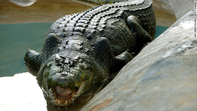 World's largest captive crocodile dies