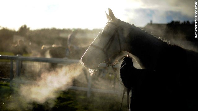 The brutal business of horse meat