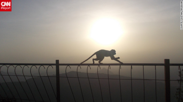 Ketan Tirodkar captured this photo while <a href='http://ireport.cnn.com/docs/DOC-807000'>feeding the monkeys</a> at sunset in Matheran.