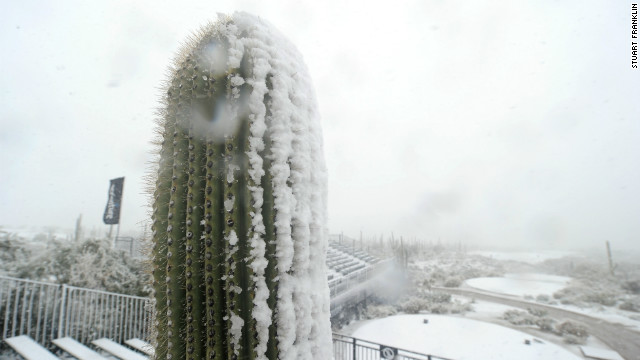 This cactus must feel confused after being covered in snow. Used to living in extreme heat in the desert, this cactus is left with more than a smattering of the white stuff.