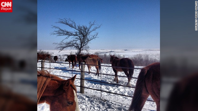 "<a href='http://ireport.cnn.com/docs/DOC-931997' target='_blank'>Grace Walton</a>, a staff member at Camp Wood YMCA in Elmdale, Kansas captured this photo as horses were let out for the morning. ""I just love our horses and I thought I'd capture one of the many beautiful moments I see here,"" she said.<!-- --> </br><!-- --> </br>"