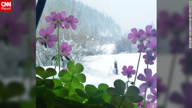 Instagram user <a href='http://ireport.cnn.com/docs/DOC-932552' target='_blank'>@skeetsummers</a> says with all the snow in Colorado right now, it's still nice enough inside to let oxalis bloom.