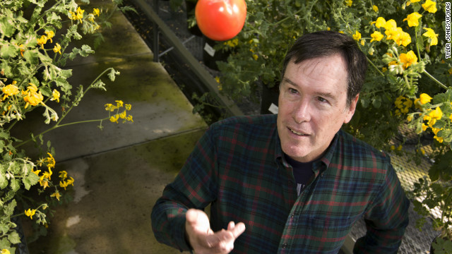 Science Seat: In search of the perfect tomato