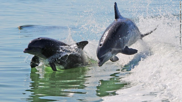 If your child spots a new dolphin on Dolphin Explorer Captain Chris Desmond's dolphin spotting trip outbound from Marco Island, Florida, the child gets to name the dolphin.