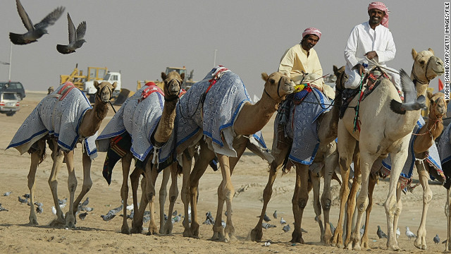 With considerable prestige is attached to owning a prize-winning camel, camel owners come from all over the region to attend.