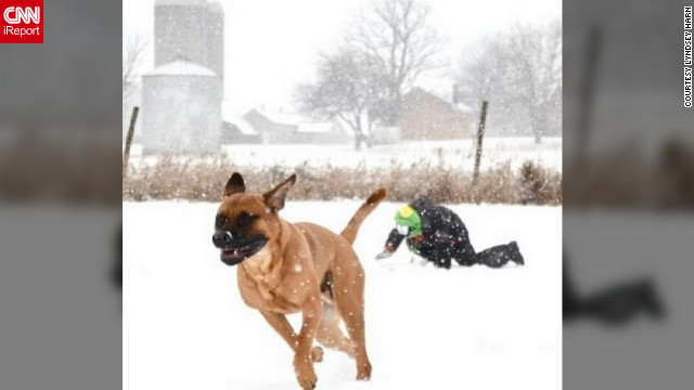 "Lyndsey Harn of Frankfort, Illinois, spent her snow day with her son Dashiel and their Bandog Mastiff, Kola, playing in the snow. School was canceled that day and ""the boys wanted to play in the snow,"" she said. ""My favorite part about the snow day was seeing my son so happy to play in it."""