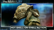 RidicuList: Tortoise shell-on-shell heat